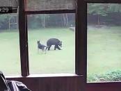Dog Plays with Black Bear