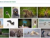 Wildlife Photography Awards 2021